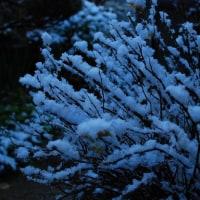雪が積もって・・・・