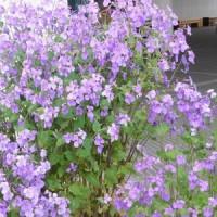季節の花に誘われて