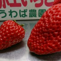 限定❗BIG苺シュークリーム🍓
