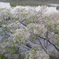 阪内川界隈