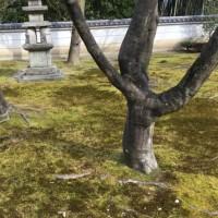 京都 相国寺なう