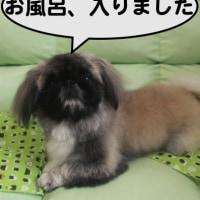 炭酸浴(チャッピー編)