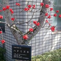 職場でハナミズキの赤い実を撮る