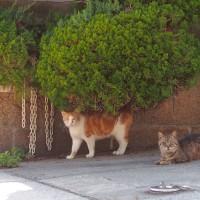 大阪市天王寺七坂の猫ちゃん by にゃぁ~にゃぁ~の日