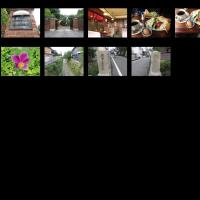 今日も リハビリウォーキング 北野天満宮&平野神社&シルバー喫茶