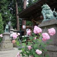 磯山神社のあじさい