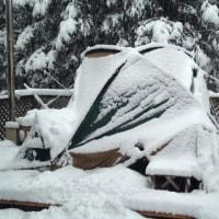 二代目タープくんと雪。