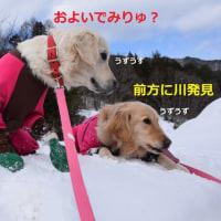 雪山でお散歩~♪