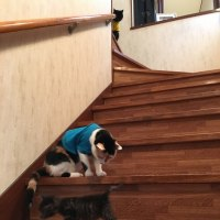 猫への階段・・・・・・