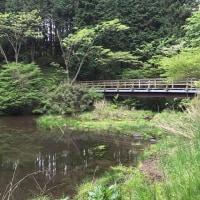 近くて素敵なお散歩コース【箱根の森】