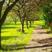 高崎自然の森:八重桜散歩径