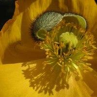 農業センタ-内に咲く花