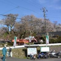大洞山・尼ヶ岳 三多気の桜経由(^^♪