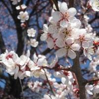 4/28(金)のPACニュース~暮らし&身近な法律・判例の情報