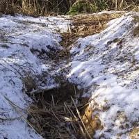 雪中飯盛山ラン