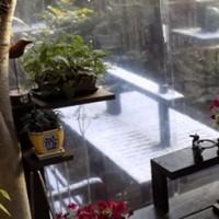「庭で二羽の 常連客」