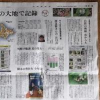 第5回北海道フラワーソン2017 (北海道の花を一斉に調べるイベント)