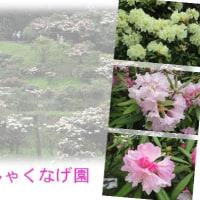 菅無田公園