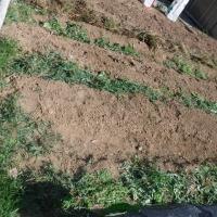 草刈りと草取り