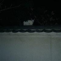 最近であった猫たち MC5135-7481
