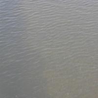 多摩川を見る