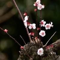 小石川植物園、春の風景