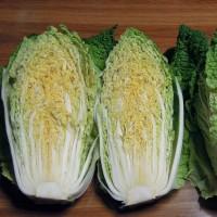 白菜の成長具合