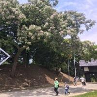 日曜日は 五月の晴れに誘われて 蚤の市散策と 公園遊びへ・・・