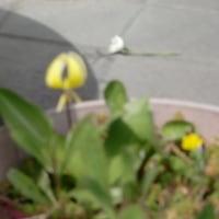 めづらしい花が咲いた!!