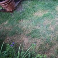 まだら模様の芝生