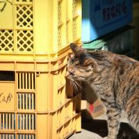 猫探訪・・縄張り点検中