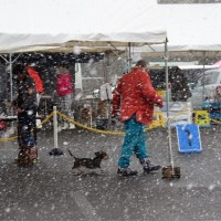雪の名古屋ドックショー