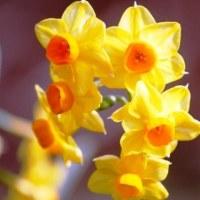 春を待ちわびる・・・⑤ 【ひで某】