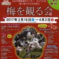 梅の香り漂う梅園(第三回)~仙台市農業園芸センター『梅を観る会』~