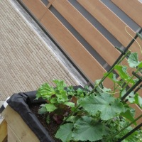 お庭の改造・・・♡