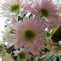 秋はやはり菊が良い A chrysanthemum is realy good in autumn!