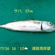 笑転爺の釣行記 7月16日☀ 久里浜・浦賀