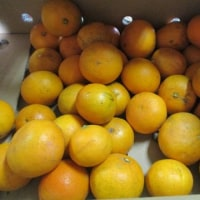 オレンジをたくさんもらったので