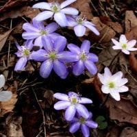 春の妖精たち