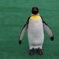 換羽ペンギン・大頭王