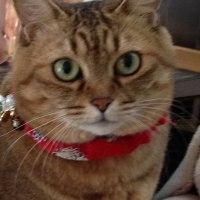 実家の猫ちゃんが亡くなる。