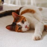 野良猫が消え、昭和の風景も消える――。 麻屋与志夫
