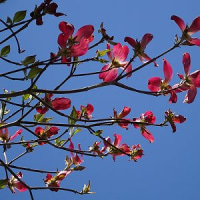播磨中央公園の春色(兵庫県加東市)