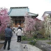 光受寺の梅は今が盛り