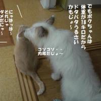遊んで~♪