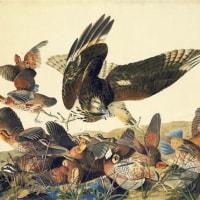 フランス系アメリカ人の自然主義者でイラストレーターのオーデュボンが生まれた。