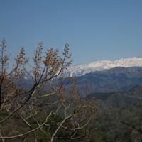 4月24日に低いお山に行って来ましたの続きです。NO.2