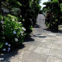唯一の新田義貞所縁の寺「内裏山九品寺」