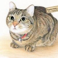 猫のイラスト(色鉛筆画)