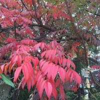 秋もそろそろ